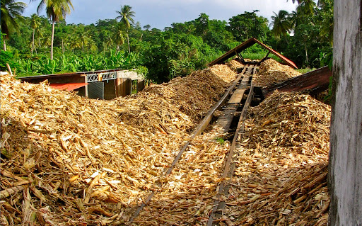 bagasse-sugarcane